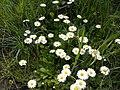 Nature - Natura (16361148243).jpg