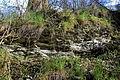 Naturschutzgebiet Am roten Steine - Hausberg - Schichten der unteren Jura (9).JPG