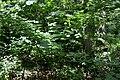 Naturschutzgebiet Haseder Busch - Im Haseder Busch (10).jpg