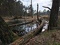 Naturschutzgebiet Schnaakenmoor Rissen.jpg