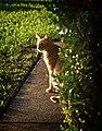 Neighbor Cat (4648270483).jpg