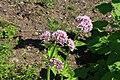 Neuer Botanischer Garten Marburg - 0015.jpg