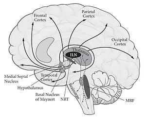 Neural correlates of consciousness - Image: Neural Correlates Of Consciousness 2