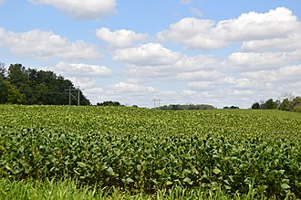 Pleasant Township, Marion County, Ohio - Fields north of Prospect