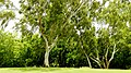 Nicaragua - Nejapa Country Club Managua 201308 - panoramio (5).jpg