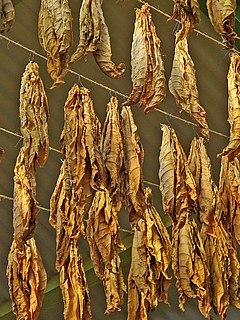 Доклад на тему табак как растение 2614