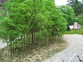 Nijojocho, Nakagyo Ward, Kyoto, Kyoto Prefecture 604-8301, Japan - panoramio (2).jpg
