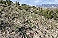 Ninemile Hill - Flickr - aspidoscelis (3).jpg