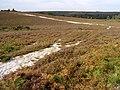 Northeast corner of Ibsley Common - geograph.org.uk - 236857.jpg
