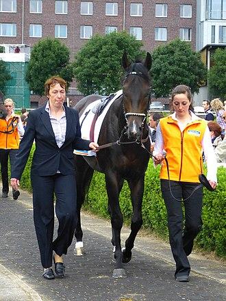 Novellist (horse) - Novellist at Hamburg in 2012
