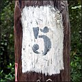 Number five on a tree.jpg