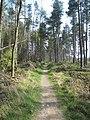 Oakenshaw Wildlife Reserve - geograph.org.uk - 401702.jpg