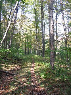 Focus of fracking fight shifts to Loyalsock State Forest