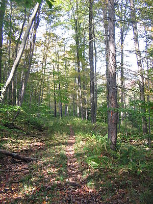 Old Loggers Path trail, north of Masten in McN...
