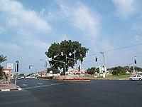 Old Shikma in Ben Zvi road.jpg