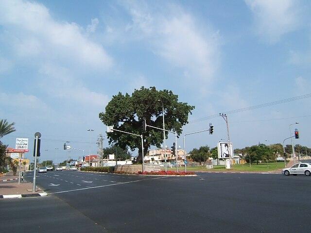 Old Shikma in Ben Zvi road