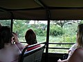 On safari (394311465).jpg