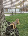 One squirrel open mouth.jpg