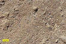 Limestone - Wikipedia