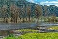 Ossiach Alt-Ossiach Bleistätter Moor Wasserflächen Baumreihen Sumpfwiesen 23052019 7013.jpg