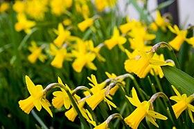 De lente is laat dit jaar