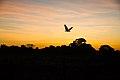 Pôr do sol no cerrado 09.jpg