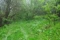 Přírodní rezervace Biely vrch, okres Ilava (03).jpg