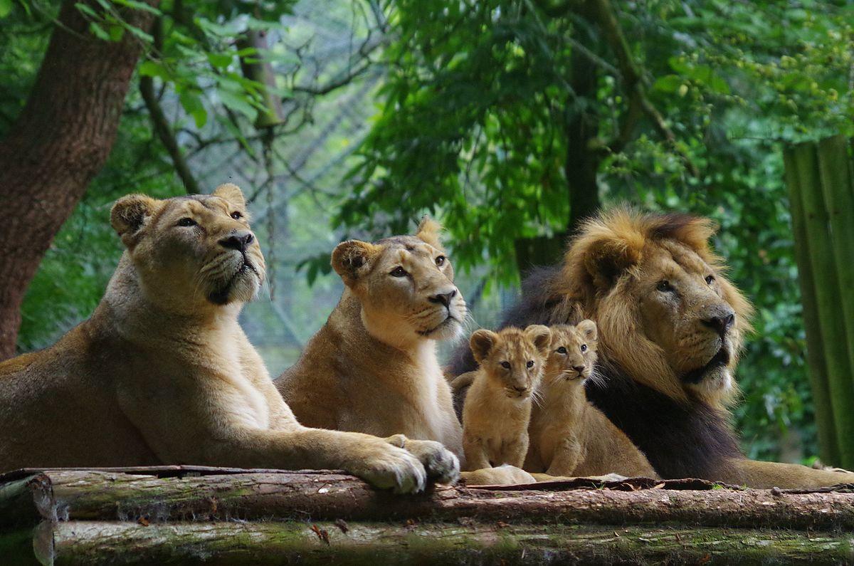 Paignton Zoo - Wikipedia