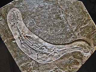 species of Mesozoic aquatic reptile