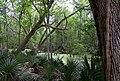 Palmetto state park.jpg