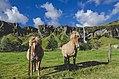 Palomino horses by a waterfall (Unsplash).jpg