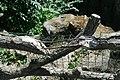 Parc des Buttes-Chaumont, garde-corps en béton 12.jpg