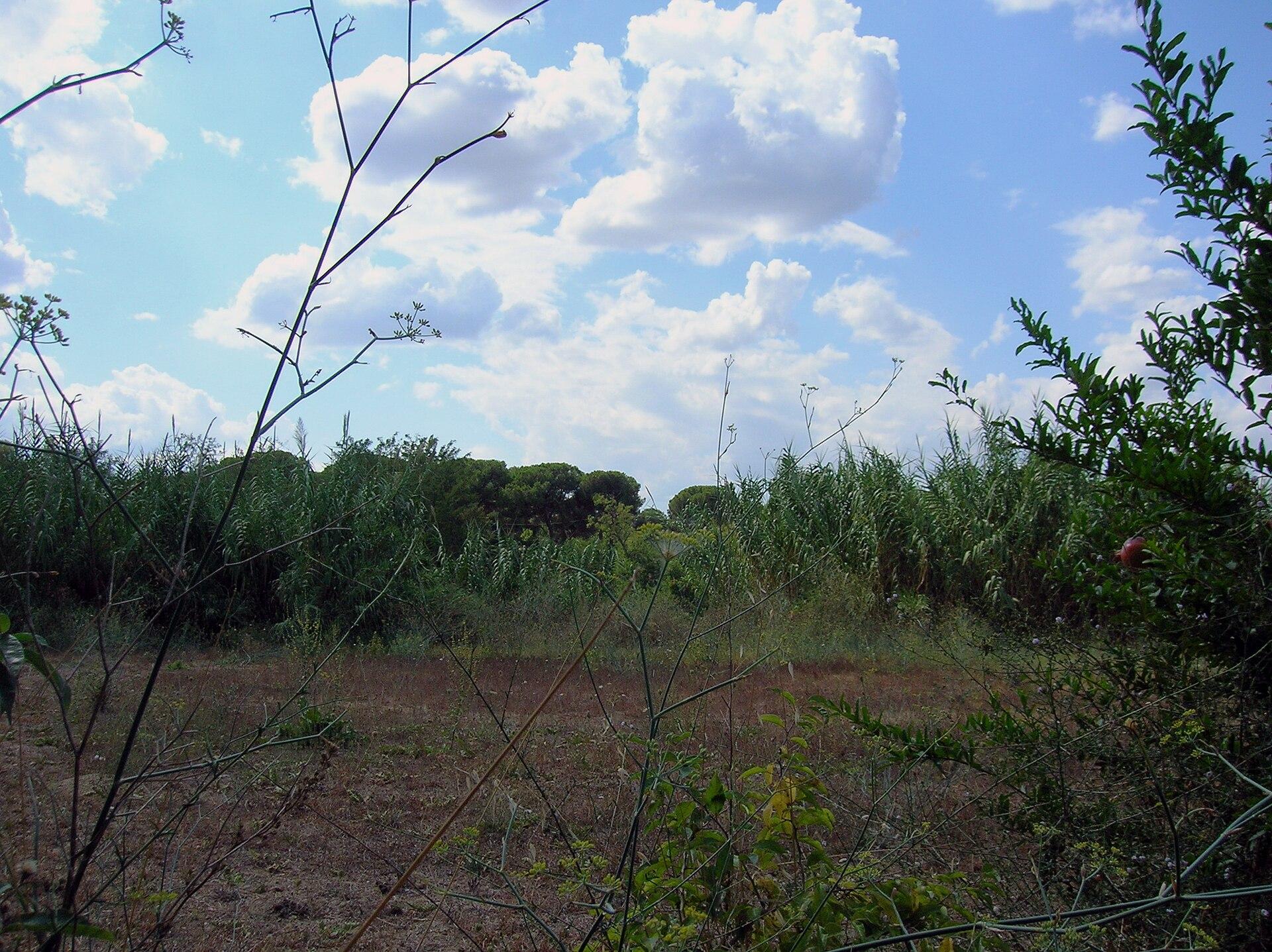 Parco regionale urbano di aguzzano wikipedia for O giardino di pulcinella roma