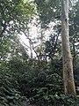 Parmadan Forest 18.jpg