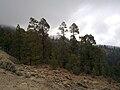Parque Natural de la Corona Forestal.jpg