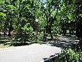 Parque da Jaqueira - Recife, Pernambuco, Brasil (8648194506).jpg