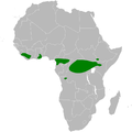 Parus funereus distribution map.png