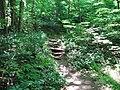 Path Company Mill Trail Umstead NC SP 0058 (3582960055).jpg
