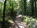 Path on the eastern edge of Parnholt Wood - geograph.org.uk - 236721.jpg