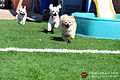 Pawliday Inn Pet Resort 24.JPG