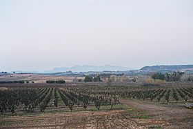 Image illustrative de l'article Penedès (DO)
