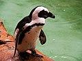 Penguin (6803080131).jpg