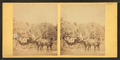 People in coach with African American coachman, from Robert N. Dennis collection of stereoscopic views.png
