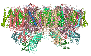Photosystem II First protein complex in light-dependent reactions of oxygenic photosynthesis