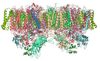 Photosystem II - Cyanobacteria photosystem II, Dimer, PDB 2AXT