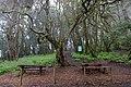 Picnic area in the Garajonay National Park on La Gomera, Spain (48293709661).jpg