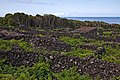 Pico Island Vineyard Culture.jpg