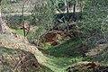 PikiWiki Israel 18945 Anemones in Beeri forest.JPG