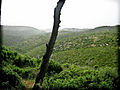PikiWiki Israel 28855 Mount Carmel.jpg