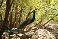 PikiWiki Israel 29899 Wildlife and Plants of Israel.jpg
